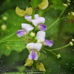liza_mohapatra_photography(P-17)